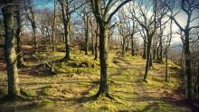Borrowdale Trees