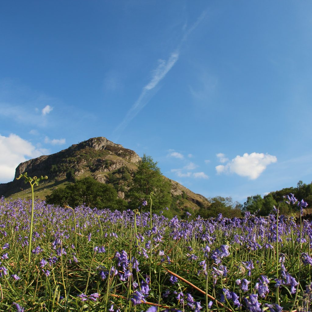 Blubells in Langstrath, with Eagle Crag above.