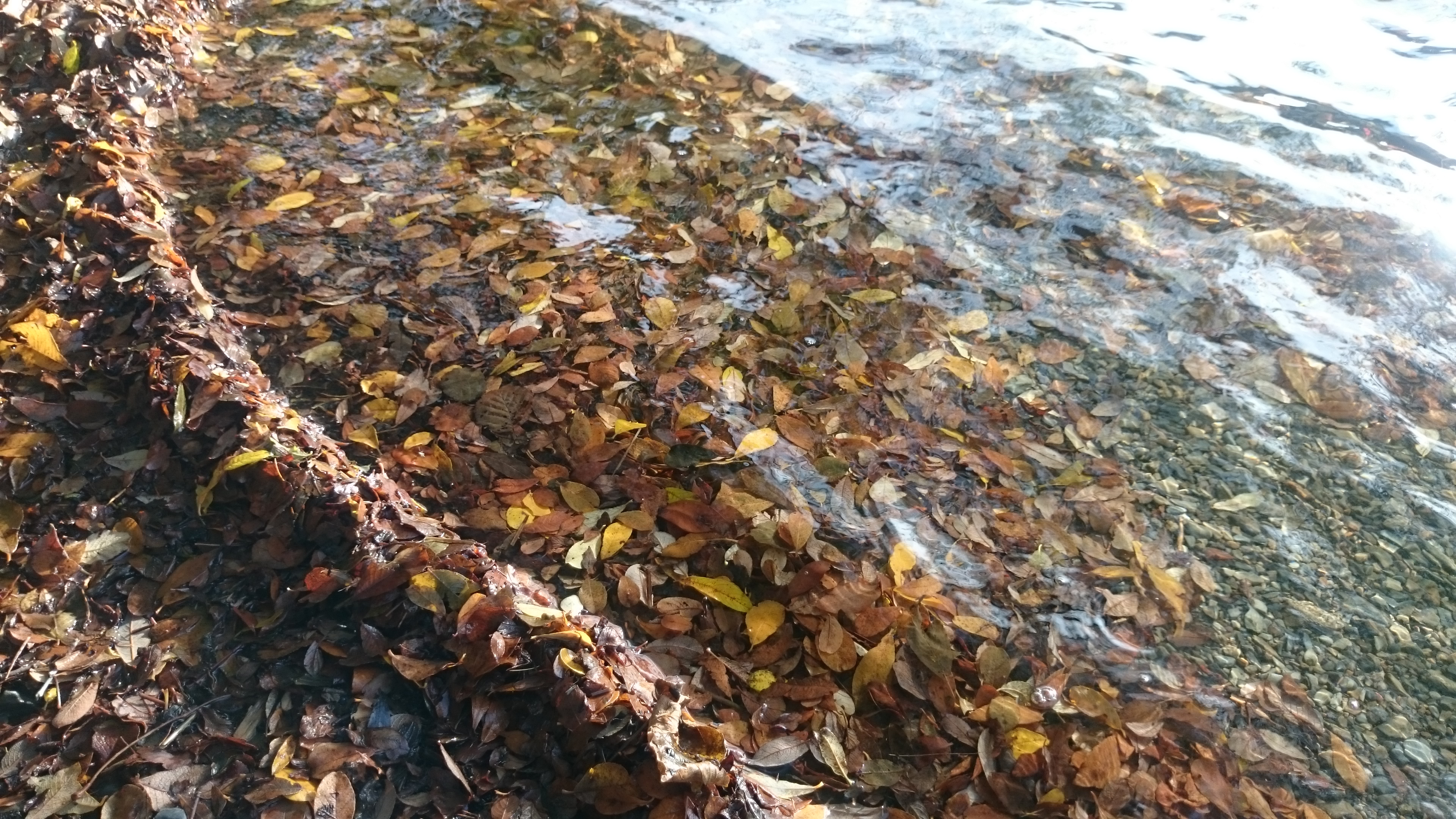 Loweswater Leaves