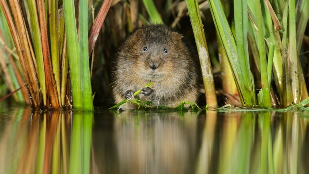 Watervole Coutryfile Awards