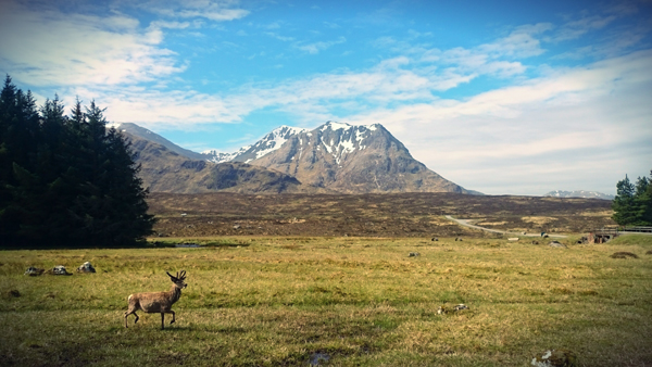 Deer at Kings House on the West Highland Way